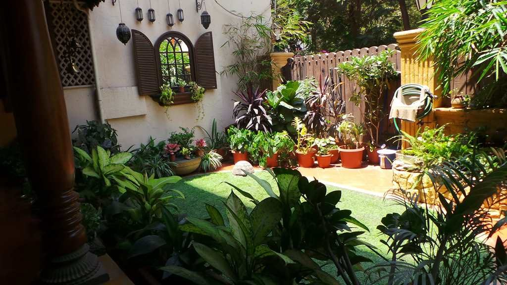 Koppikers Mumbai home Garden goals Beautiful gardens